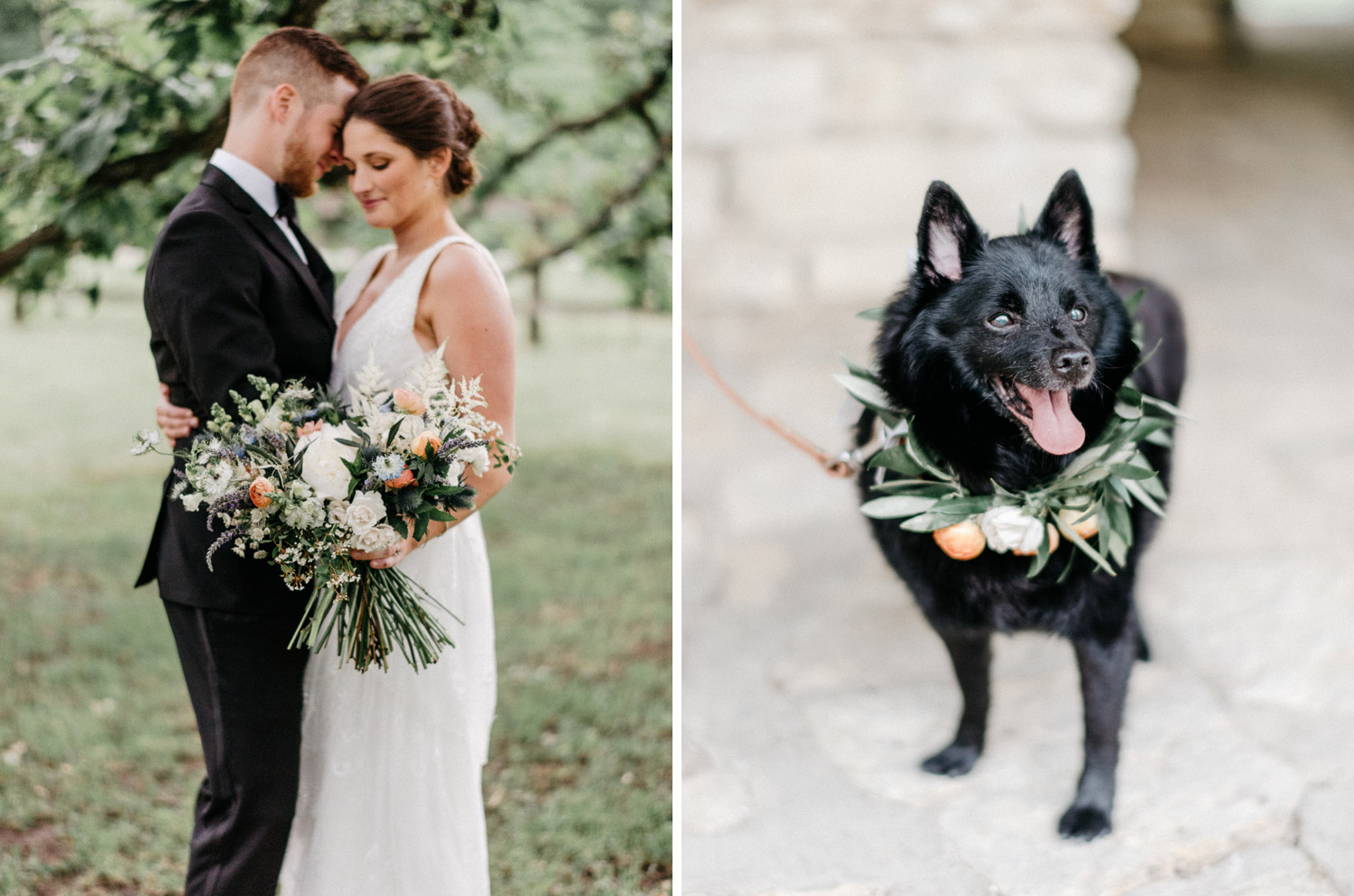 Dogs at weddings by geneoh photography